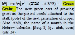 aviv green grain
