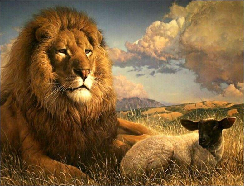 lion lamb 2
