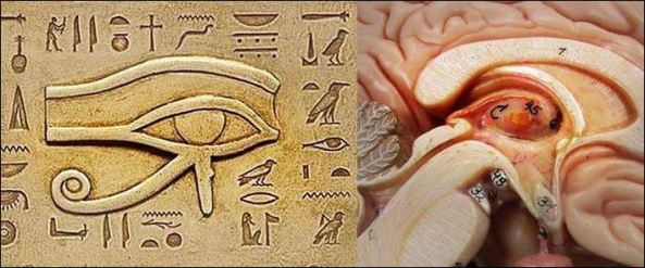 pineal gland all seeing eye